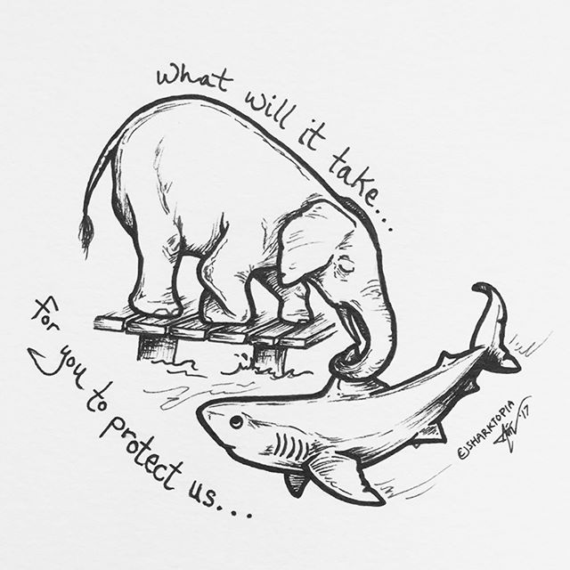 UPDATE: Due to backlash, Trump has now tweeted that the decision will be put on hold on whether or not to overturn the ban. Nice work :)!!!!! After starting off the week eating a bowl of #sharkfinsoup, Trump decided to attack another endangered species by lifting the ban on importing ivory into the USA. We have never been so ashamed to have our homebase in the USA. There are passionate conservationists, biologists, enviornmental lawyers who worked tirelessly for YEARS to get bans like this put in place. It is maddening that one man can reverse that so casually. Important and beautiful art by @sharktopia_cc. 🐘CLICK BELOW to see the types of businesses and hunting guides that will profit off this. @bulletsafaris @worldwidehunts @TSPER20 @huntinginsouthafrica @huntingsouthafrica @aloeafricahuntingsafaris @tj_ph87 @bayly_sippel_hunting_safaris @kafueroyal @pdsafaris @riebelton_safaris @nb_safaris #somerbysafaris #NealAndBrownleeLLC #saveelephants #savesharks #racingextinction #oceanicpreservationsociety #lovetheleuser #trophyhunting #sporthunting #gamehunting #africansafari #safari #elephants #iloveelephants